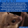 WTF Fun Fact – Bats Communicate Directly