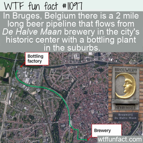 WTF Fun Fact - Bruges Beer Pipeline