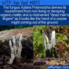 WTF Fun Fact – Dead Man's Fingers