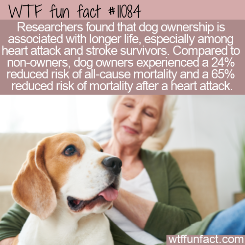 WTF Fun Fact - Dogs For Long Life