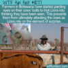 WTF Fun Fact – Eyes On The Behind