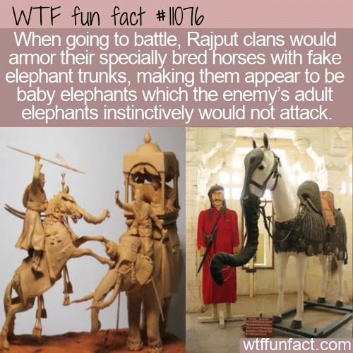 WTF Fun Fact - Fake Baby Elephants