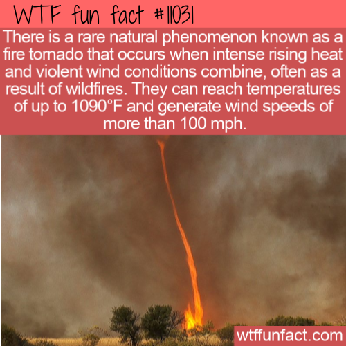WTF Fun Fact - Fire Tornado