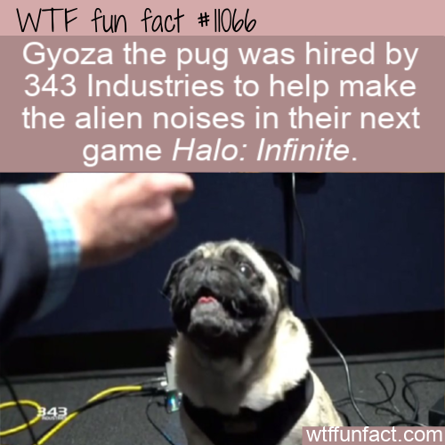 WTF Fun Fact - Gyoza The Pug
