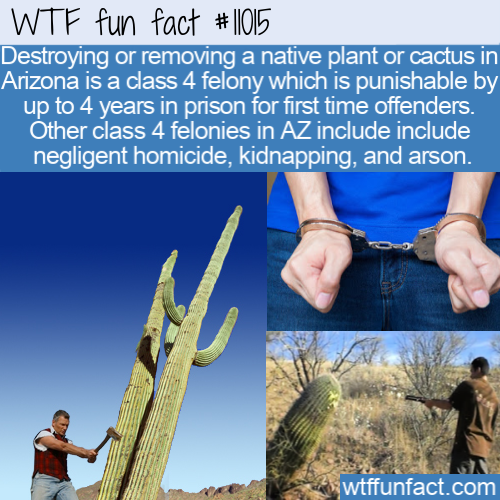 WTF Fun Fact - How Arizona Protects Cacti