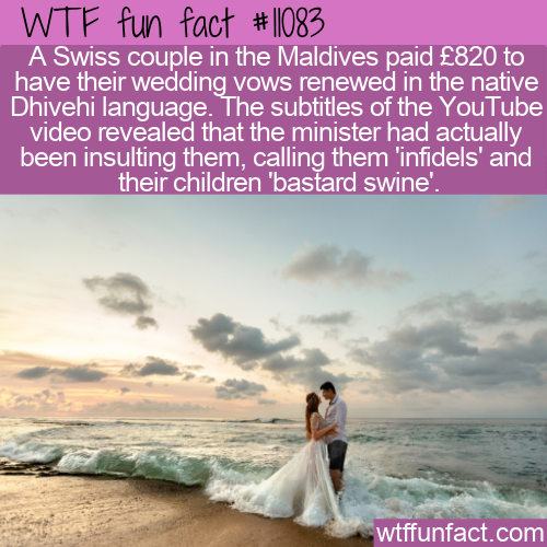 WTF Fun Fact - Insulting Subtitles