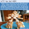 WTF Fun Fact – Toast Artwork