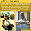 WTF Fun Fact – Towser The Mouser