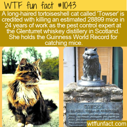 WTF Fun Fact - Towser The Mouser