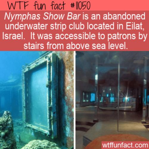 WTF Fun Fact - Underwater Strip Club