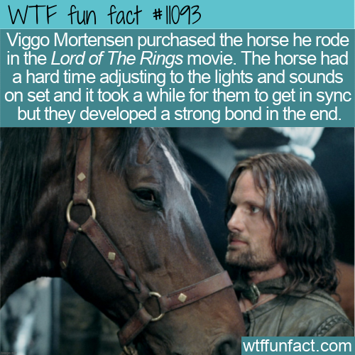 WTF Fun Fact - Viggo Bought His LOTR Horse