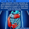 WTF Fun Fact – Appendix Stores Good Bacteria