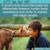 WTF Fun Fact – Goats Like Happy People