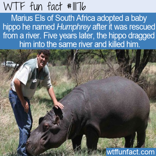 WTF Fun Fact - Killed By Pet Hippo
