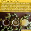 WTF Fun Fact – Male And Female Hops