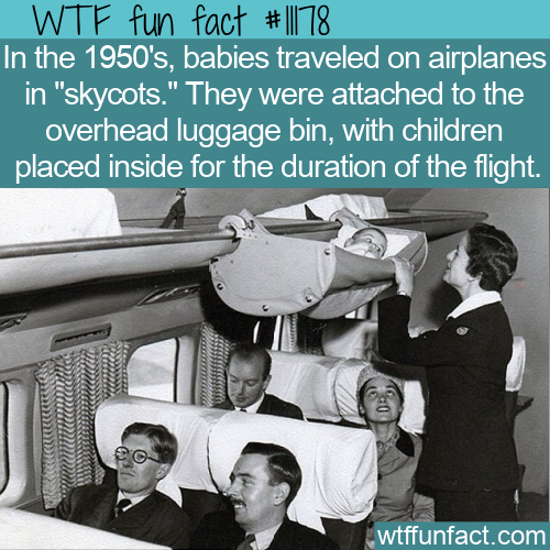 WTF Fun Fact - Skycots