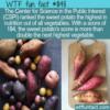 WTF Fun Fact – Top Ranked Sweet Potato