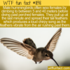 WTF Fun Fact – Woo By Diving