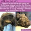WTF Fun Fact – 18,000-year-old Dogor