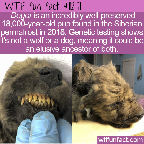 WTF Fun Fact - 18,000-year-old Dogor
