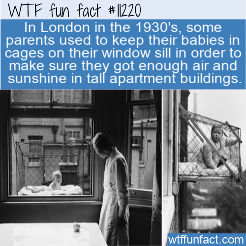 WTF Fun Fact - Baby Window Cage