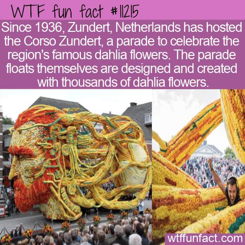 WTF Fun Fact - Corso Zundert