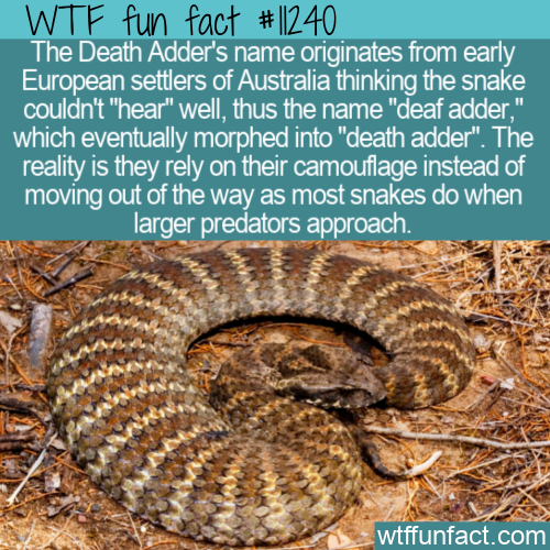 WTF Fun Fact - Death Adders Name