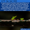 WTF Fun Fact – Lazy Worker Ants