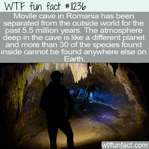 WTF Fun Fact - Movile Cave