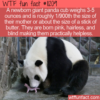 WTF Fun Fact – Newborn Baby Panda
