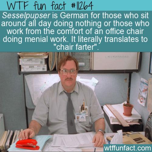 WTF Fun Fact - Sesselpupser
