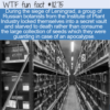 WTF Fun Fact – Starved In A Room Full Of Seeds