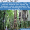 WTF Fun Fact – Tana Toraja's Dead Baby Trees