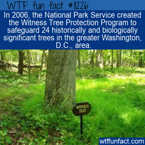 WTF Fun Fact - Witness Tree Protection Program